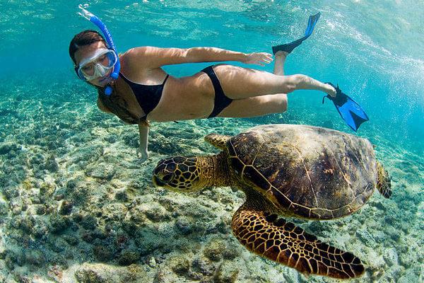 Snorkeling With Honu Sea Turtle In Kona Hawaii